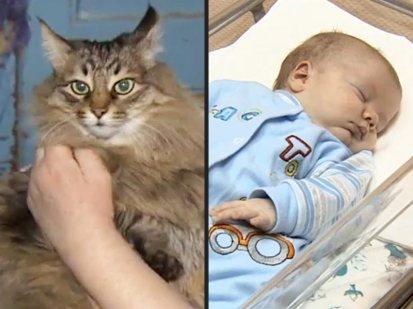 Katze mit Baby